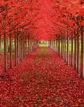 Veličanstvene fotografije stabala diljem svijeta