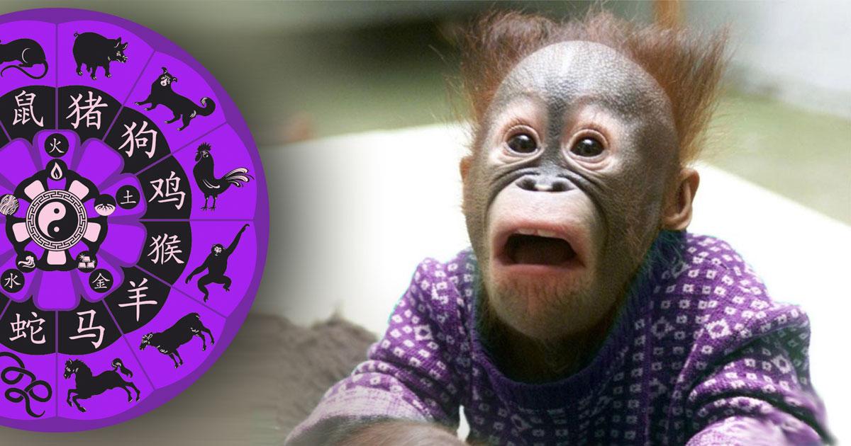 Jesi li majmun?